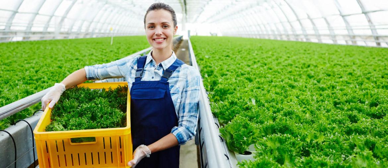 Entorno Agroindustrial