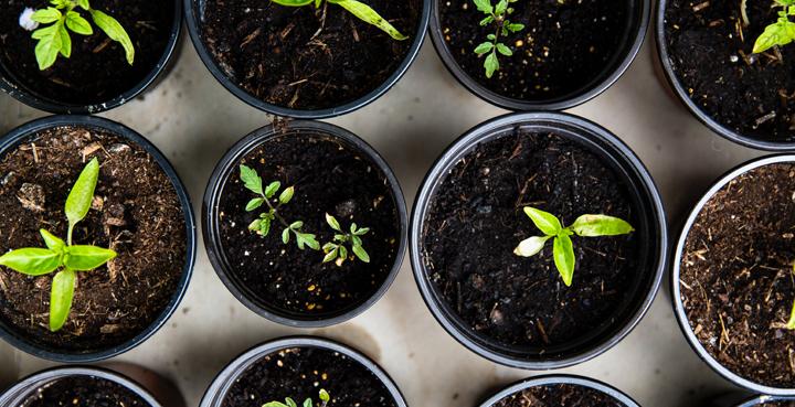necesidades financieras startup maceta plantas crecimiento