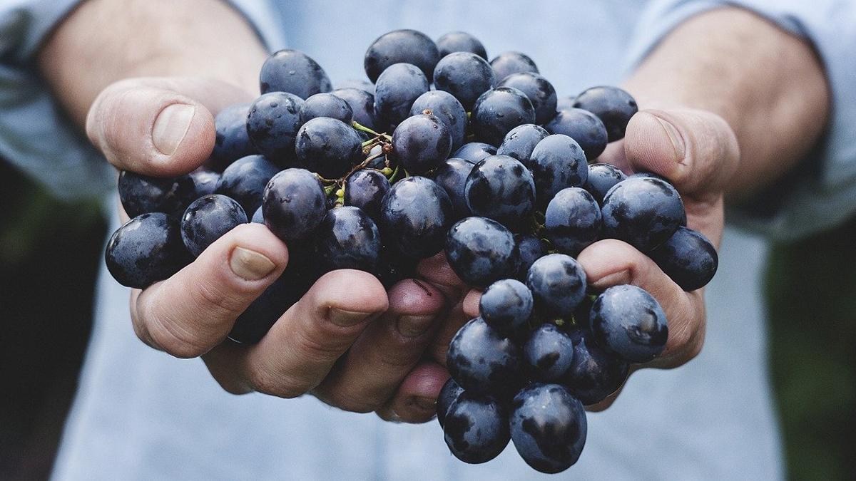 uvas alimentos ecologicos