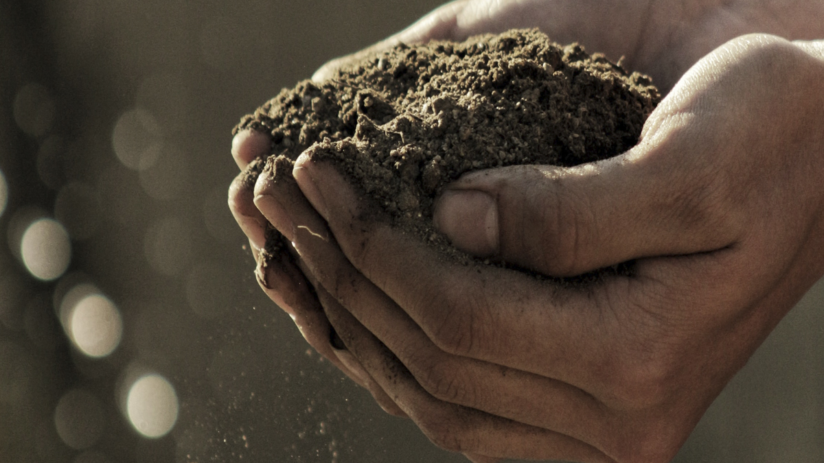 manos de hombre llenas de tierra de campo alimentacion sostenible capsa vida