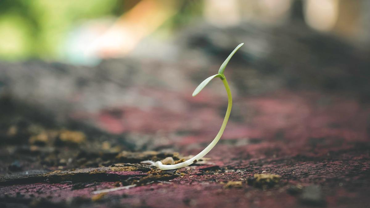 semilla creciendo plan de negocio startup capsa vida