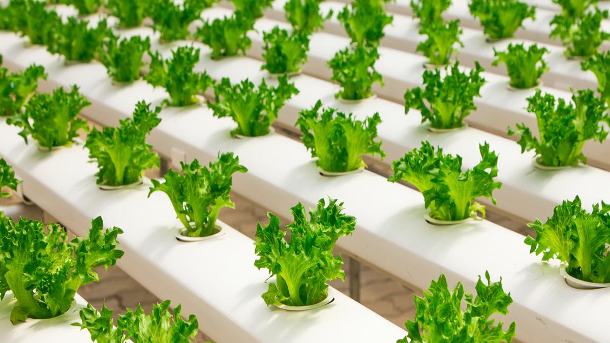 agricultura sostenible objetivos de desarrollo sostenible onu