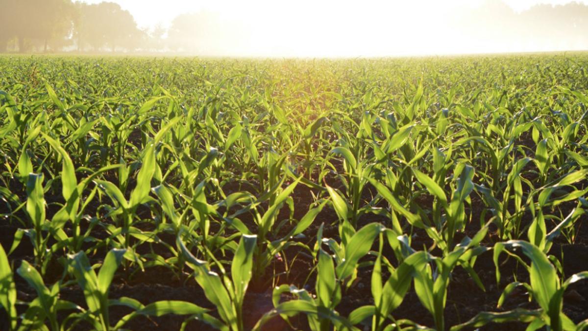campo verde lucha desperdicio alimentos capsa vida