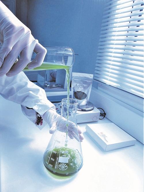 estudios-microalgas-biocombustibles