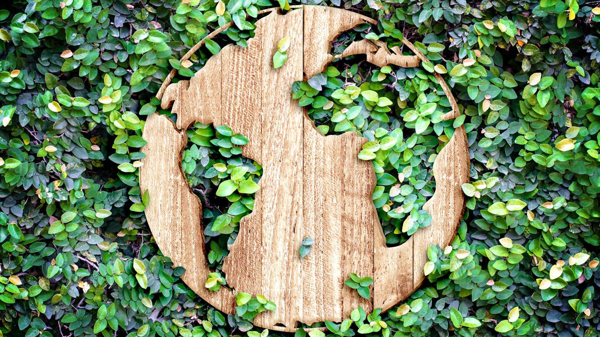 mapamundi de madera rodeado de naturaleza capsa vida