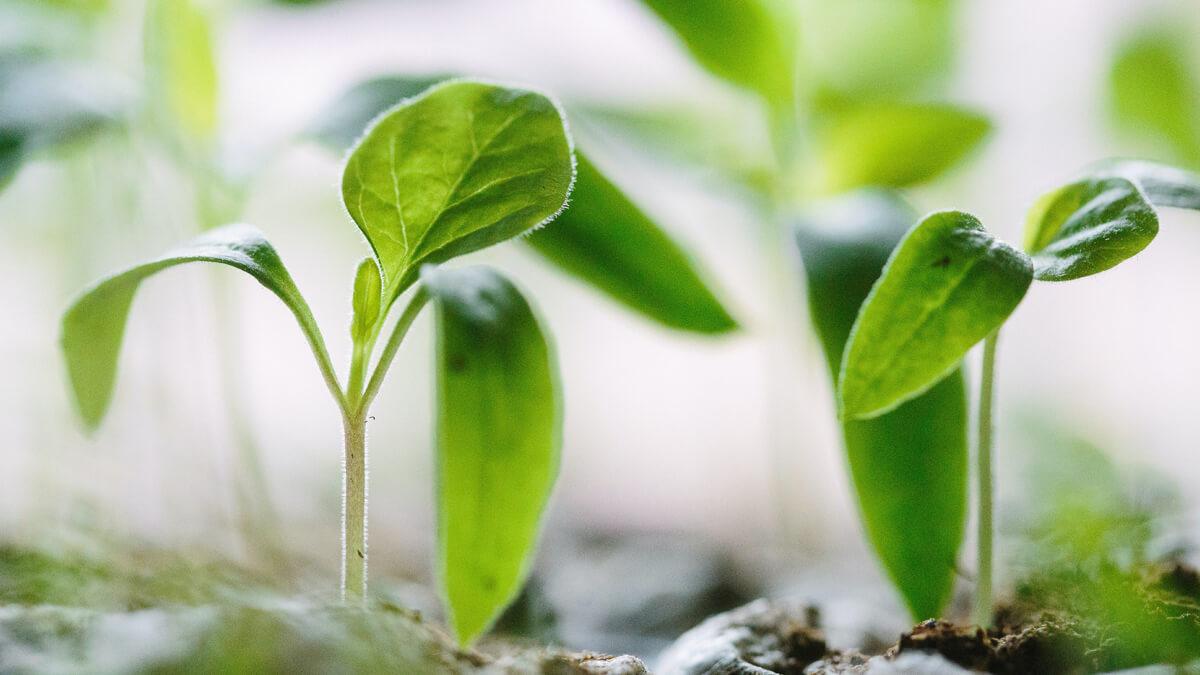 tecnologia en la agricultura capsa vida