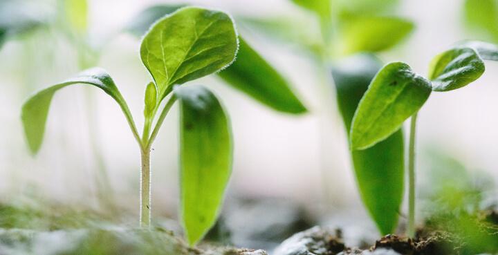 tecnologia en la agricultura