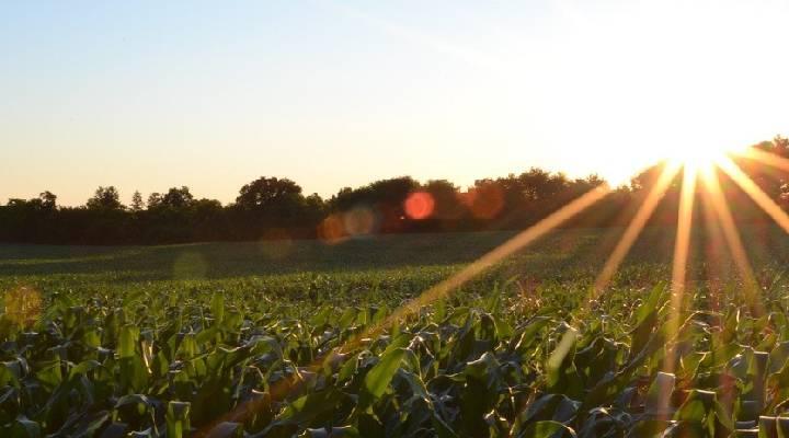 campo soleado