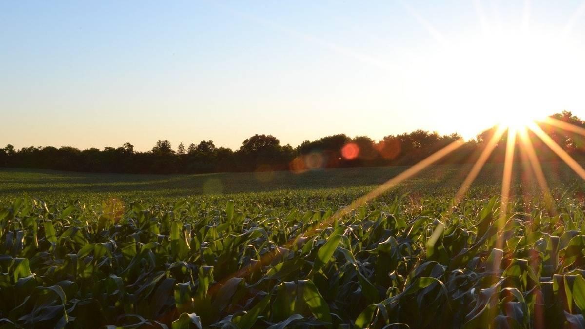 campo soleado residuo cero agricultura