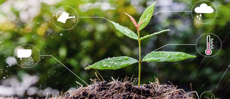 planta pequena que crece con abono y regadio como una startup con inversion