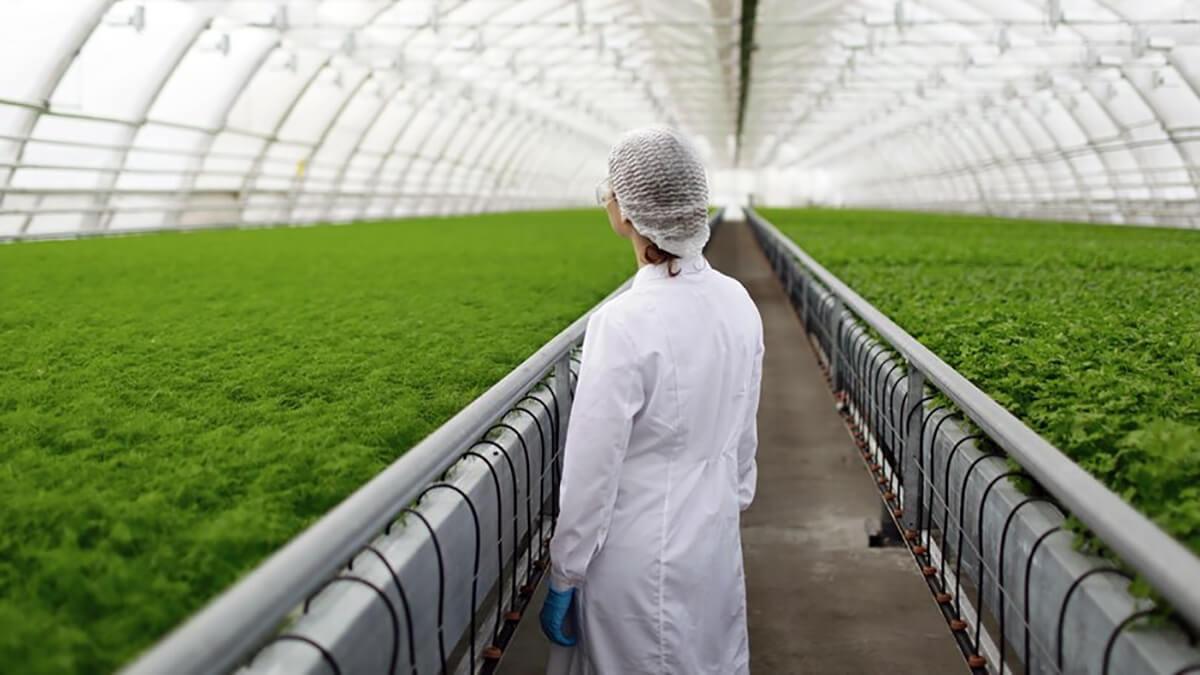 trabajadora invernadero revisando estado de los alimentos