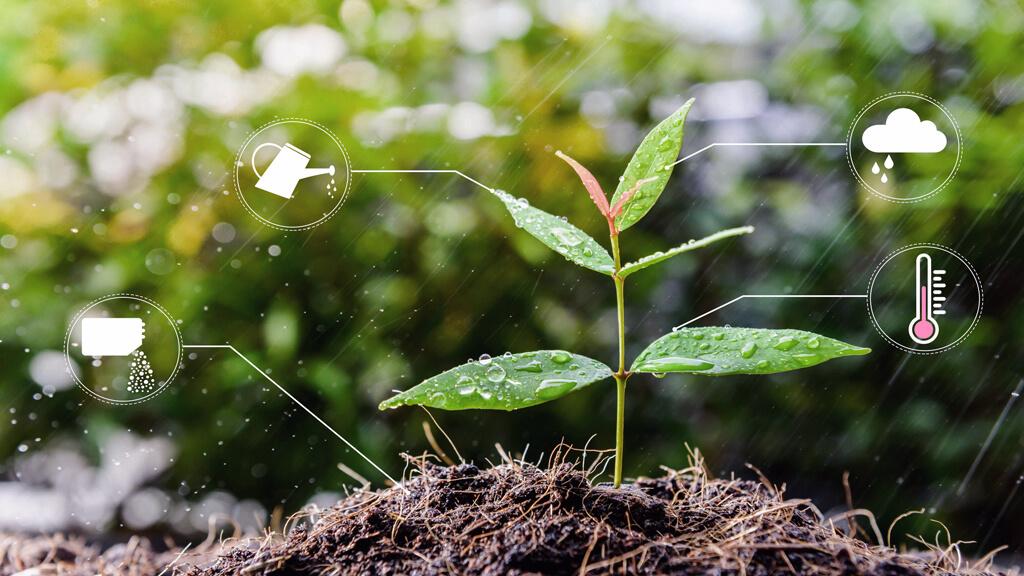 una pequena planta que crece con abono y regadio