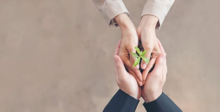 manos de dos personas sujetando una misma planta