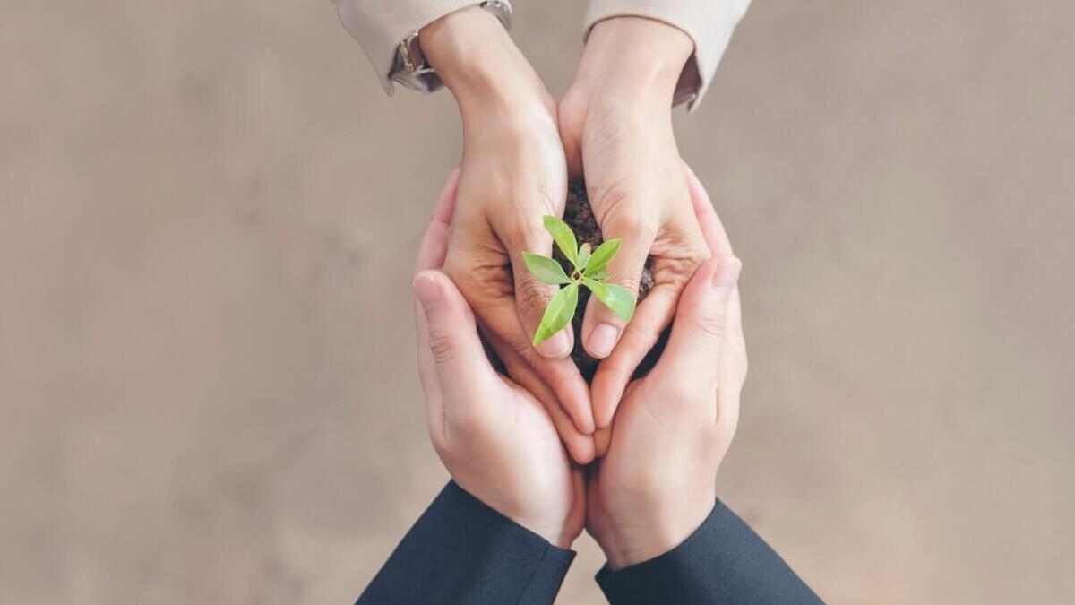 manos de dos personas sujetando una planta - alianzas para la innovacion
