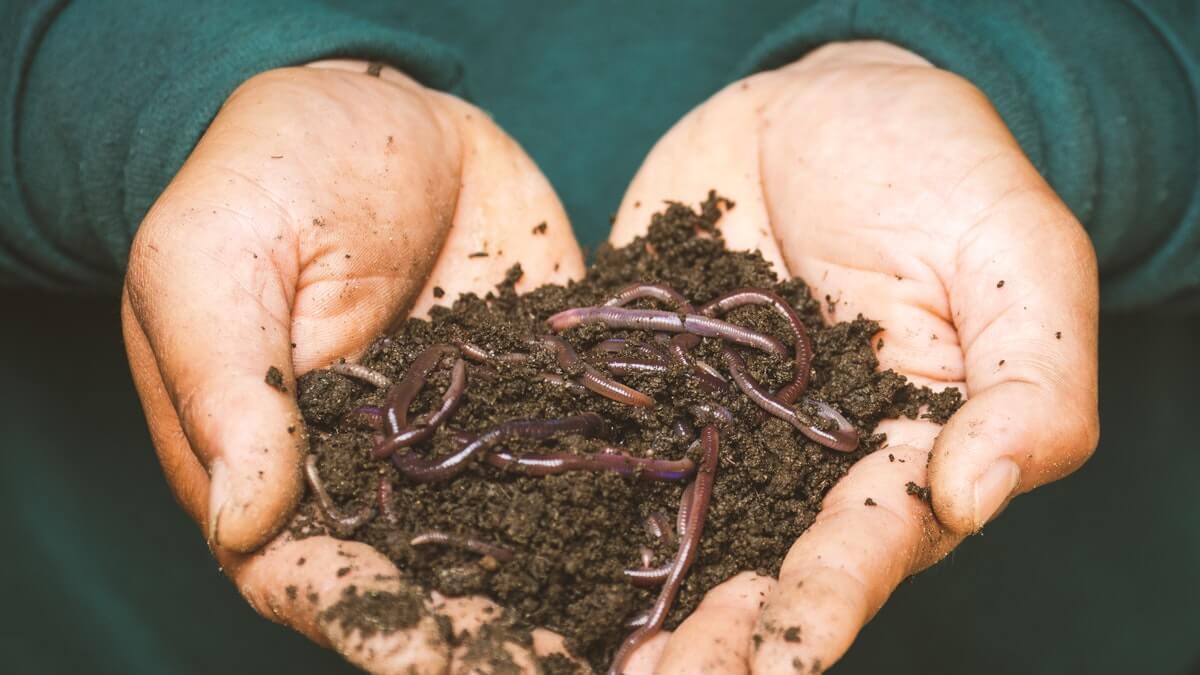 fertilizante humus lombriz capsa vida