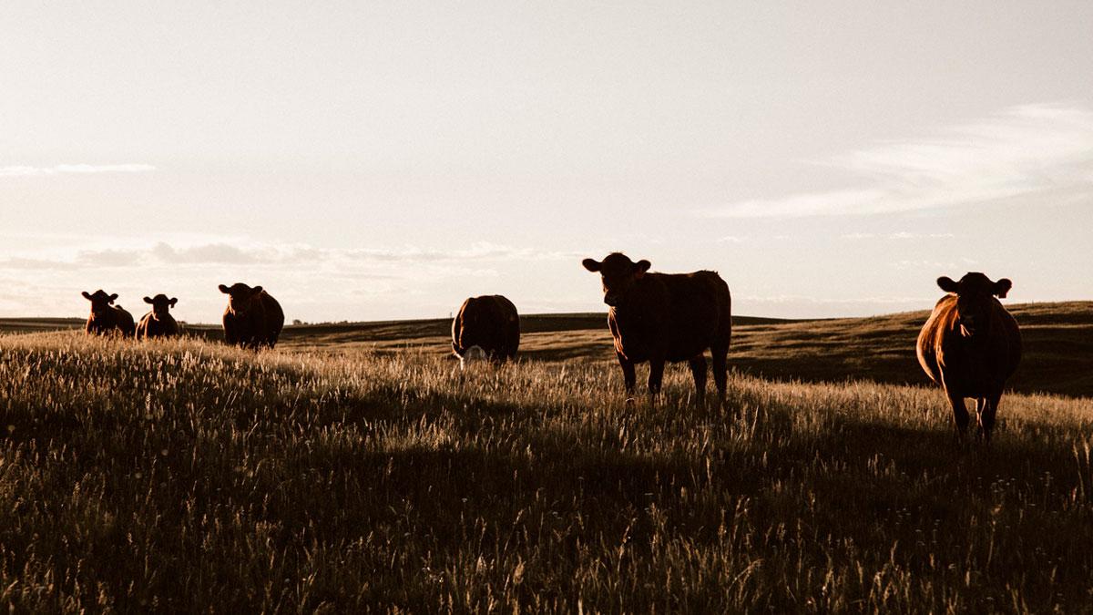 la granja del futuro